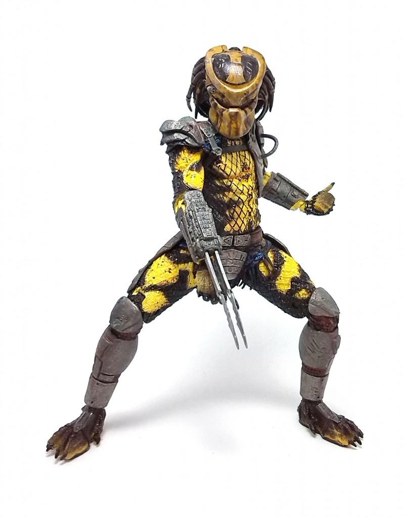 Wasp Predator (21)